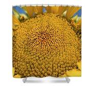Giant Sunflower Shower Curtain