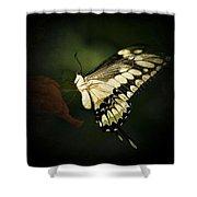 Giant Swallowtail 2 Shower Curtain