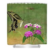 Giant Swallowtail Butterfly II Shower Curtain