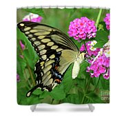 Giant Swallowtail Butterfly  IIi Shower Curtain