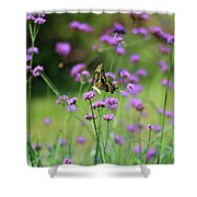Giant Swallowtail Butterfly In Purple Field Shower Curtain