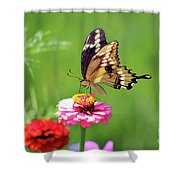 Giant Swallowtail Butterfly On Pink Zinnia Shower Curtain