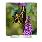 Giant Swallowtail Two Shower Curtain