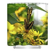 Giant Swallowtail Wings Folded Shower Curtain