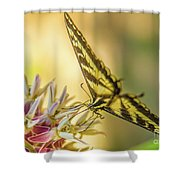 Giant Swallowtail With Yosemite Showy Milkweed Shower Curtain