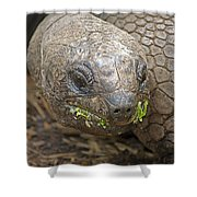 Giant Tortoise Shower Curtain