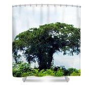 Giant Tree In Amazon Skyline Shower Curtain