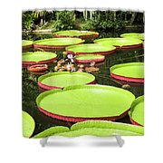 Giant Water Lily Platters Shower Curtain