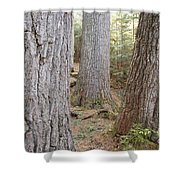 Giant White Pines - White Mountains New Hampshire Shower Curtain