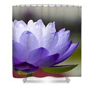 Gigantea Blue Cloud Water Lily Shower Curtain