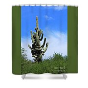 Gigantea Saguaro Old And Strong Shower Curtain
