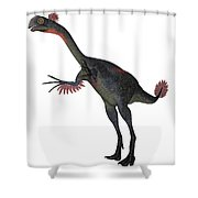 Gigantoraptor Dinosaur On White Shower Curtain