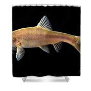 Gii Golden Line Barbel Shower Curtain