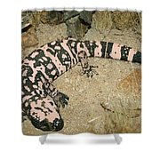 Gila Monster Shower Curtain