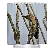 Gila Woodpecker Shower Curtain