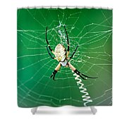 Gilded Silver-face Shower Curtain