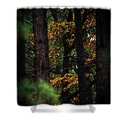 Gilded Visions Shower Curtain