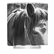 Gillagan The Horse In Glacier National Park   Shower Curtain