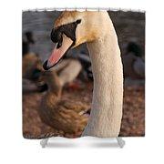 Ginger Swan Shower Curtain