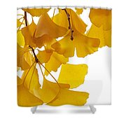 Ginkgo Ginkgo Biloba Leaves In Autumn Shower Curtain