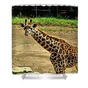 Giraffe 1 Shower Curtain