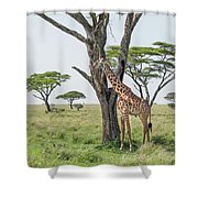 Giraffe 2 Shower Curtain