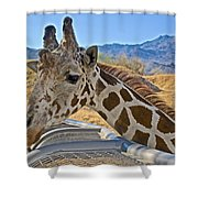 Giraffe At Feeding Station In Living Desert Zoo And Gardens In Palm Desert-california Shower Curtain