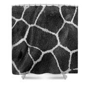 Giraffe Black And White Shower Curtain