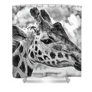 Giraffe Bw Shower Curtain