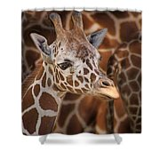 Giraffe - Camouflage Shower Curtain