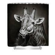 Giraffe Eating Shower Curtain by Johan Swanepoel