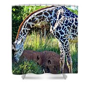 Giraffe Feasting Shower Curtain