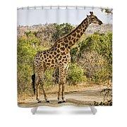 Giraffe Grazing Shower Curtain