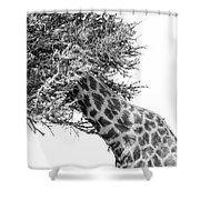 Giraffe Hide And Seek Shower Curtain