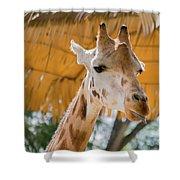 Giraffe In The Zoo. Shower Curtain