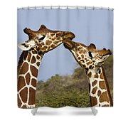 Giraffe Kisses Shower Curtain