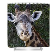 Giraffe Looking At You Shower Curtain