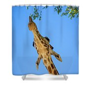 Giraffe Lunch Shower Curtain