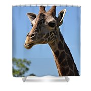 Giraffe Neck Shower Curtain