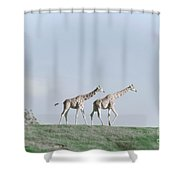 Giraffe Pair On Hill Shower Curtain
