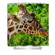 Giraffe Profile Shower Curtain