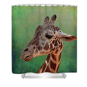 Giraffe Square Painted Shower Curtain