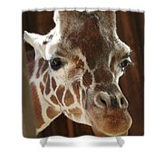 Giraffe Taking A Peek Shower Curtain