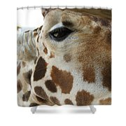 Giraffe Up Close Shower Curtain