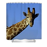 Giraffe With Oxpeckers Shower Curtain
