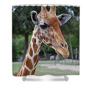 Giraffe Youth Shower Curtain