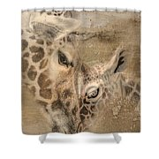 Giraffes, Big And Small Shower Curtain