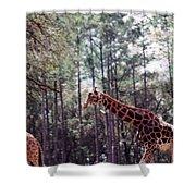 Giraffesgalore Shower Curtain