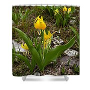Glacier Lily 3 Shower Curtain