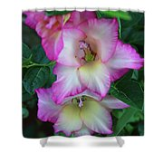 Gladiolas Blooming With Ripening Blueberries Shower Curtain